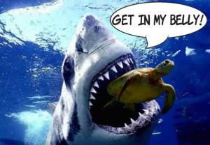 shark sea turtle