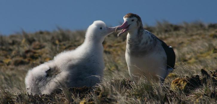 amsterdam albatross