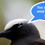 The Black Noddy Tern – Nature's Winged Simpletons