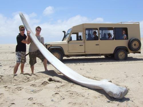 Whale-bone-on-the-Skeleton-Coast