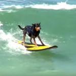Unleashed!  A Dog's Gotta Surf