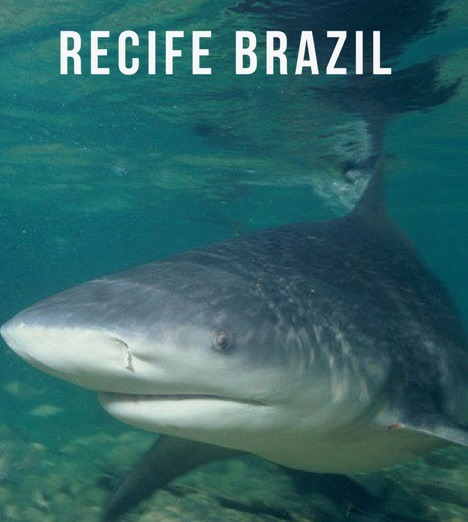recife brazil sharks