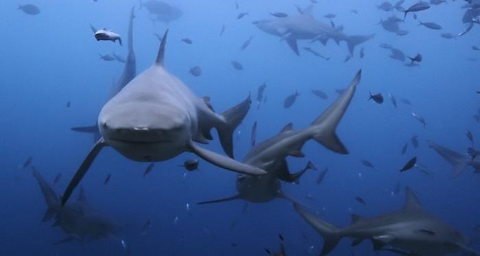 reunion island sharks