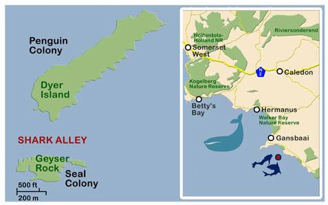 shark alley map