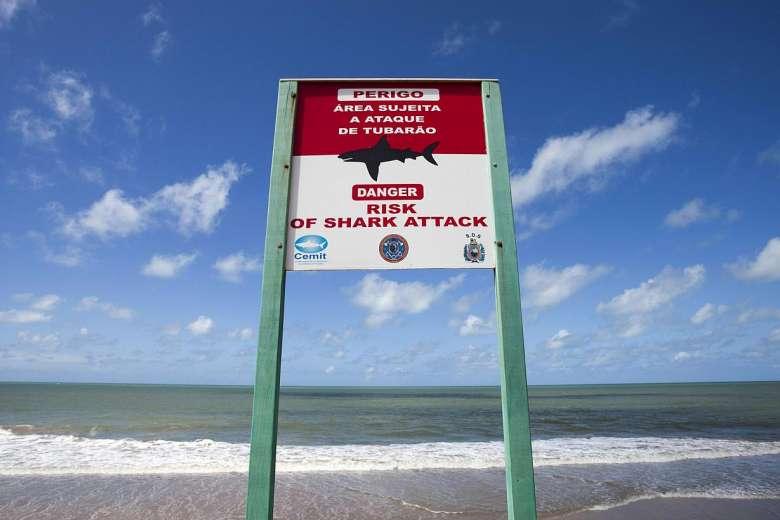 shark warning sign recife
