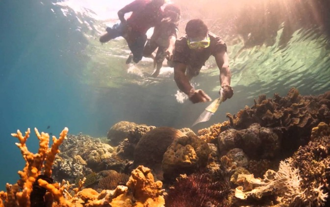 snorkel paradise new guinea beaches