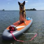 Vilano Navigator Inflatable SUP Review