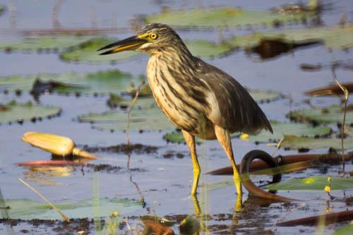 birdwatching close up image of bird