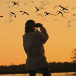 Birdwatching At Home – Tips On Making Your Back Yard A Bird Haven