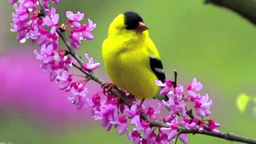 flower-with-yellow-bird