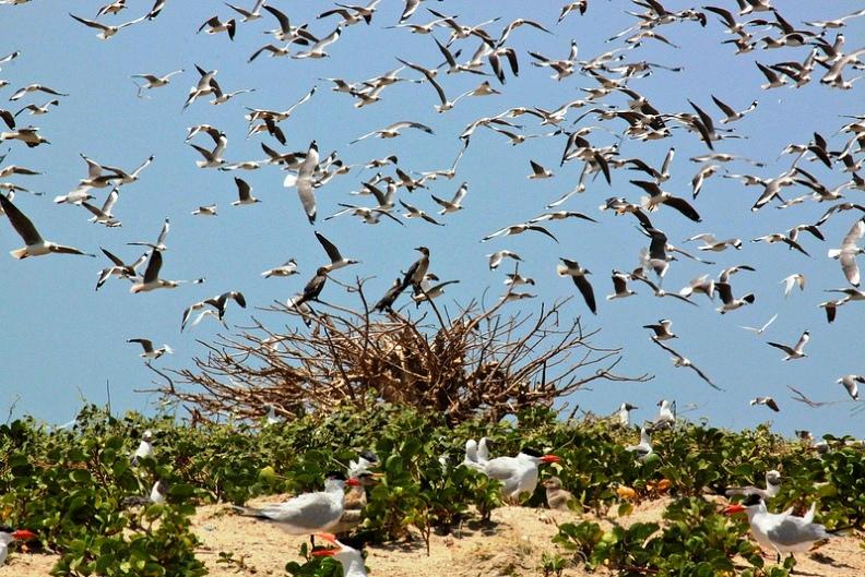 tanji-river-karinti-bird-reserve-beach