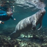 Manitee Kisses And Tigershark Dreams – You've Found The Best Snorkeling Spots In North America
