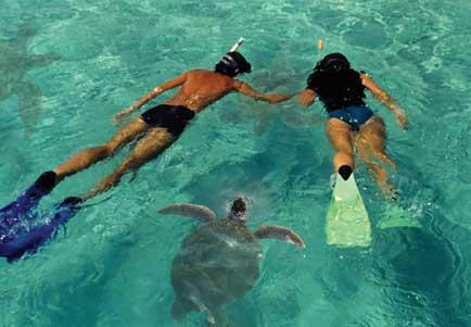 Best Dolphin Tour Hawaii