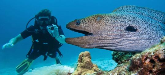 moray eels sardinia snorkel