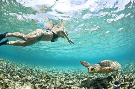 turtle scuba