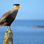 Bird Migration Fall-Out – Where And When To Spot Vagrants