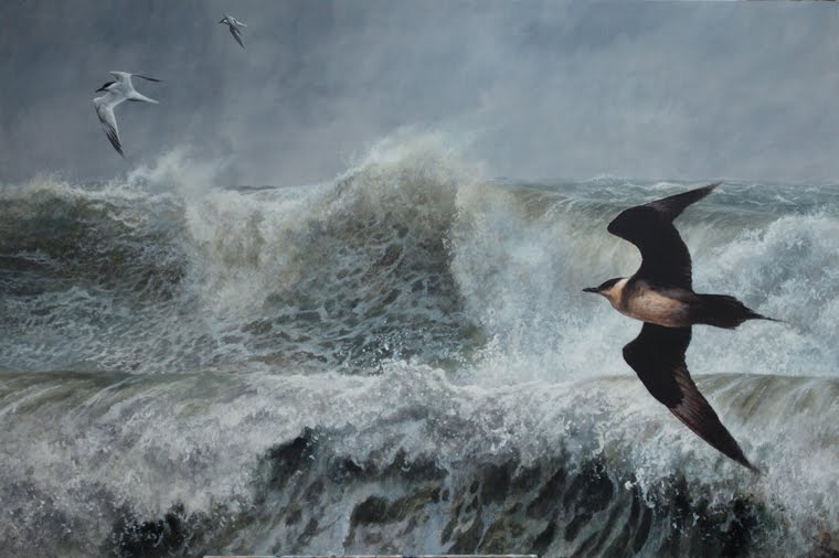 skua in a storm