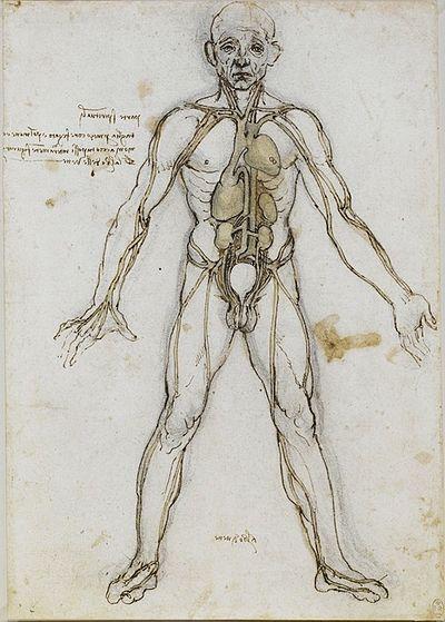 Human anatomy - nerves