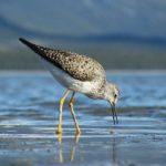 Sand Fleas And Beach Hoppers – Naughty Or Nice?