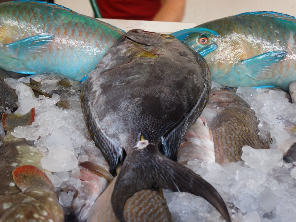 Yellow Fin Surgeonfish info
