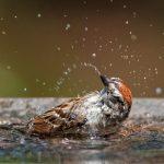 Birds Need To Bathe Too