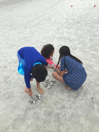 kids collecting sea shells