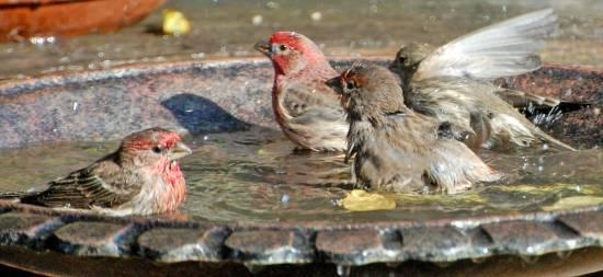 tips on buying a bird bath for your garden