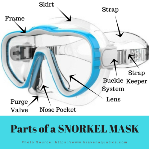 parts of a snorkel mask
