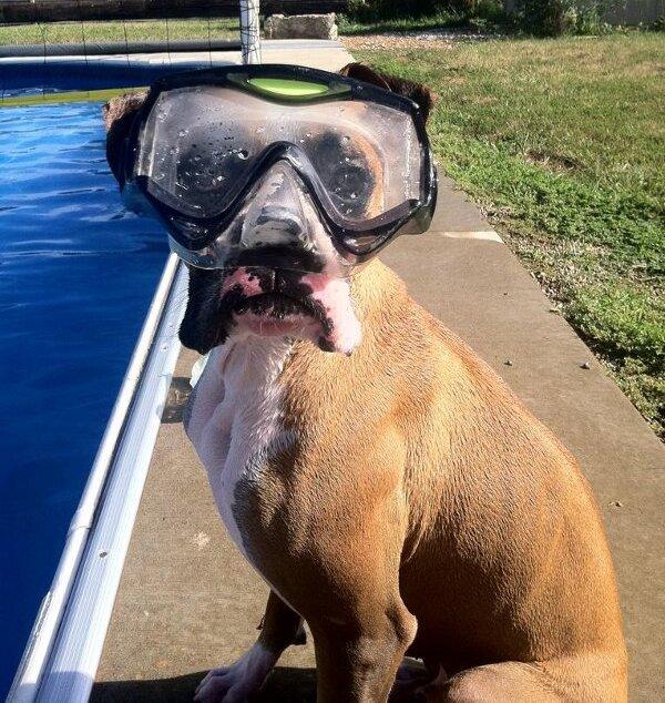 snorkeling-mask-dog