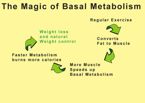 basalmetabolism cycle