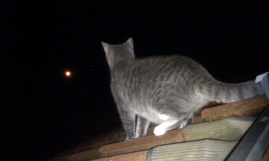 cat on the prowl at night