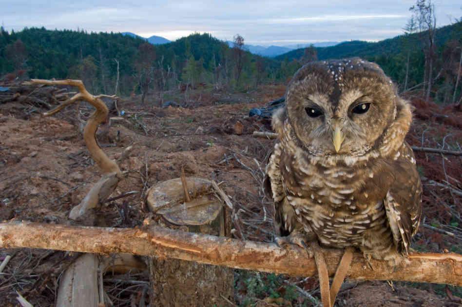 habitat bird loss