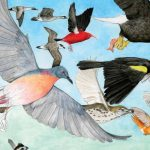 The Decline in Bird Numbers, Reasons Why, and Ways To Help