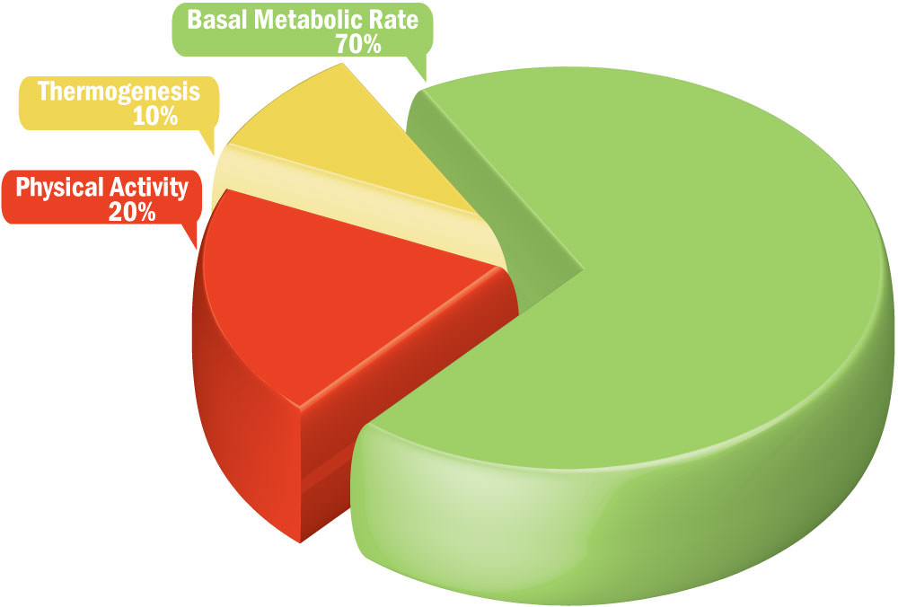 what is my basal metabolic rate