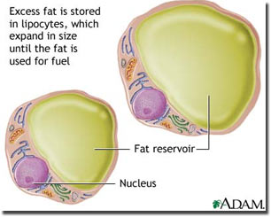 diagram of fat cell