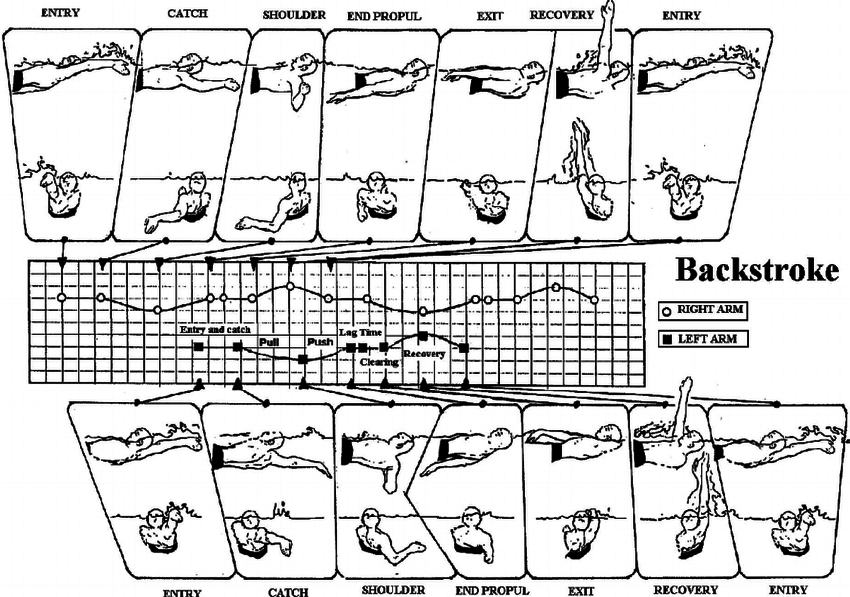 Arm-stroke-phases-in-backstroke-of-the-left-and-right-arms