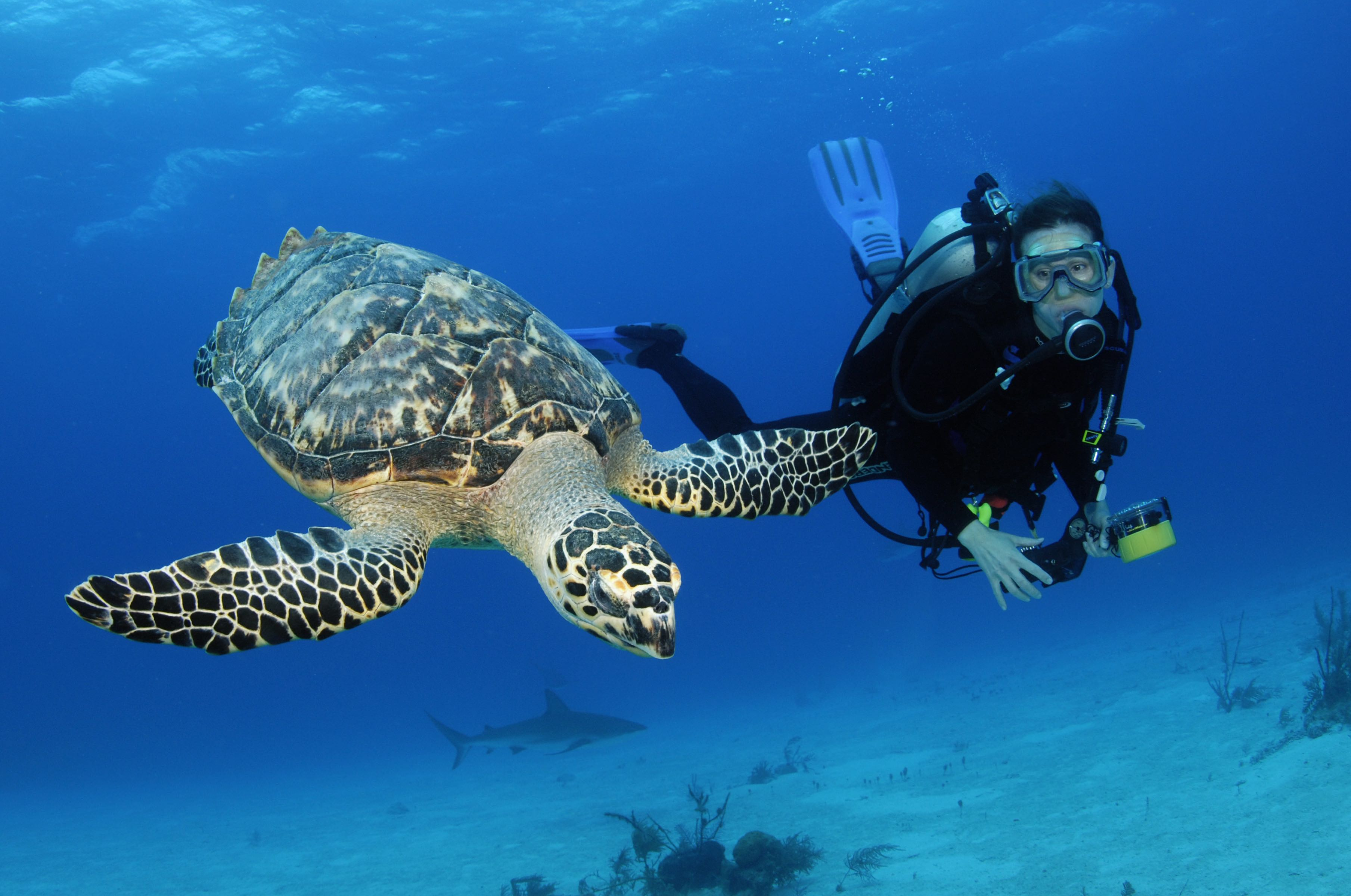 getting your padi scuba divers license