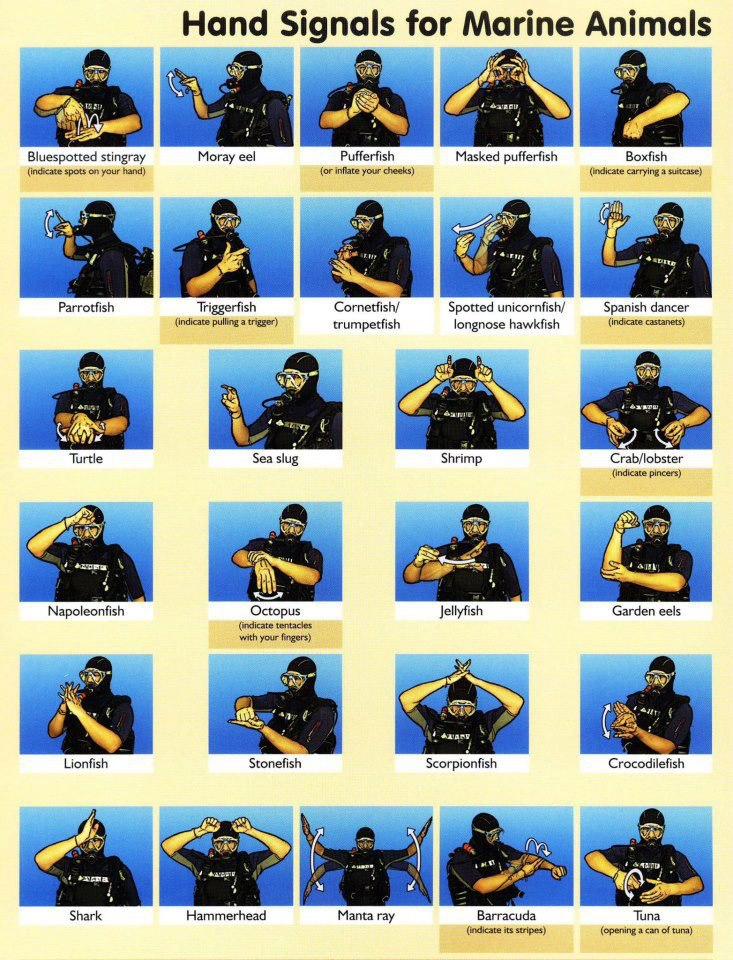 hand signs for marine animals
